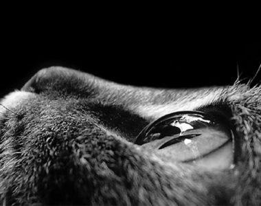 Rowerowe kocie oko